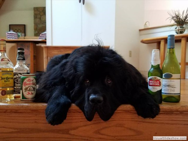 Fletcher Had a Little Too Much FUN on His 3rd Birthday! (Newfoundland)