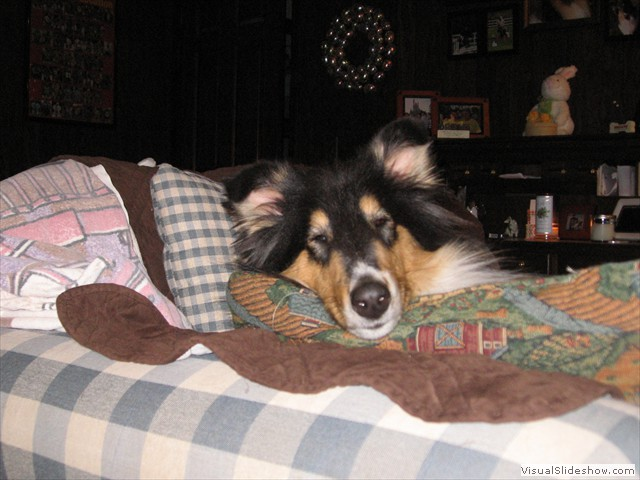 Nessie From the Couch<br/>(Collie)