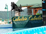 Jette in Dock Diving Event at Cabela's<br/>(Flat Coated Retriever)