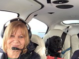 Piper Enjoying His Plane Ride (Black Labrador Retriever)